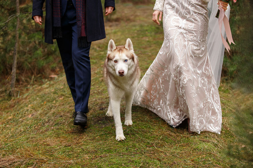 a bride and groom walking with their dog