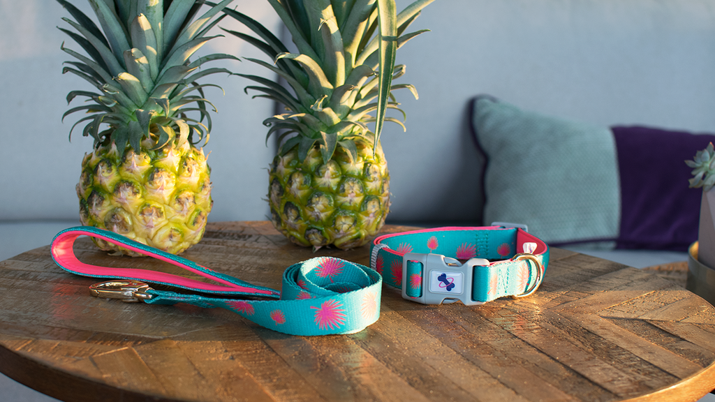 Tail Trip Dog Collar And Leash Set Tropico Design