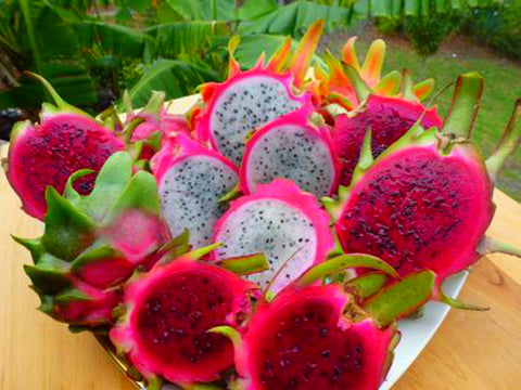 Become A Dragon Fruit Farmer South Africa