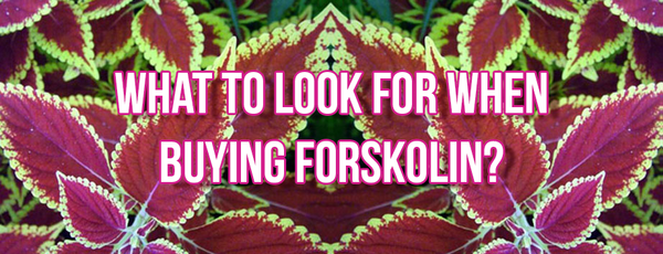 Buy The Best Forskolin Supplement Online - Coleus Forskohlii Root Extract For Rapid Weight Loss