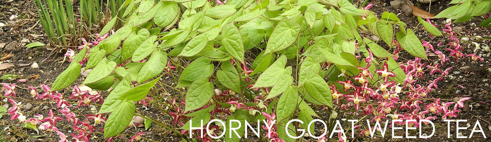 Does Horny Goat Weed Work - Learn About Horny Goat Weed Tea!
