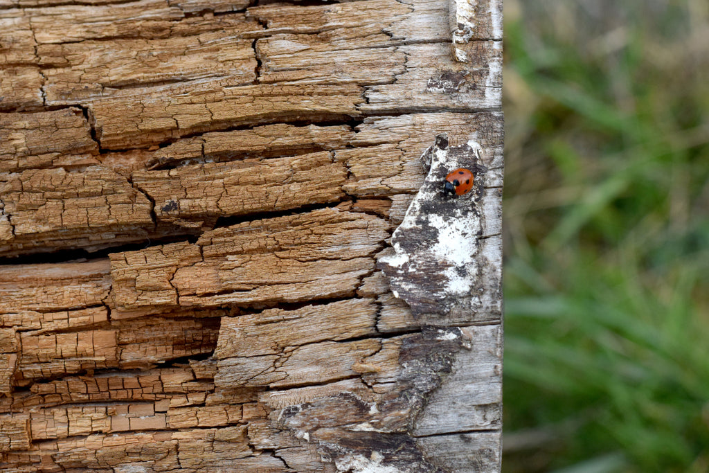 a ladybug on wood in nature
