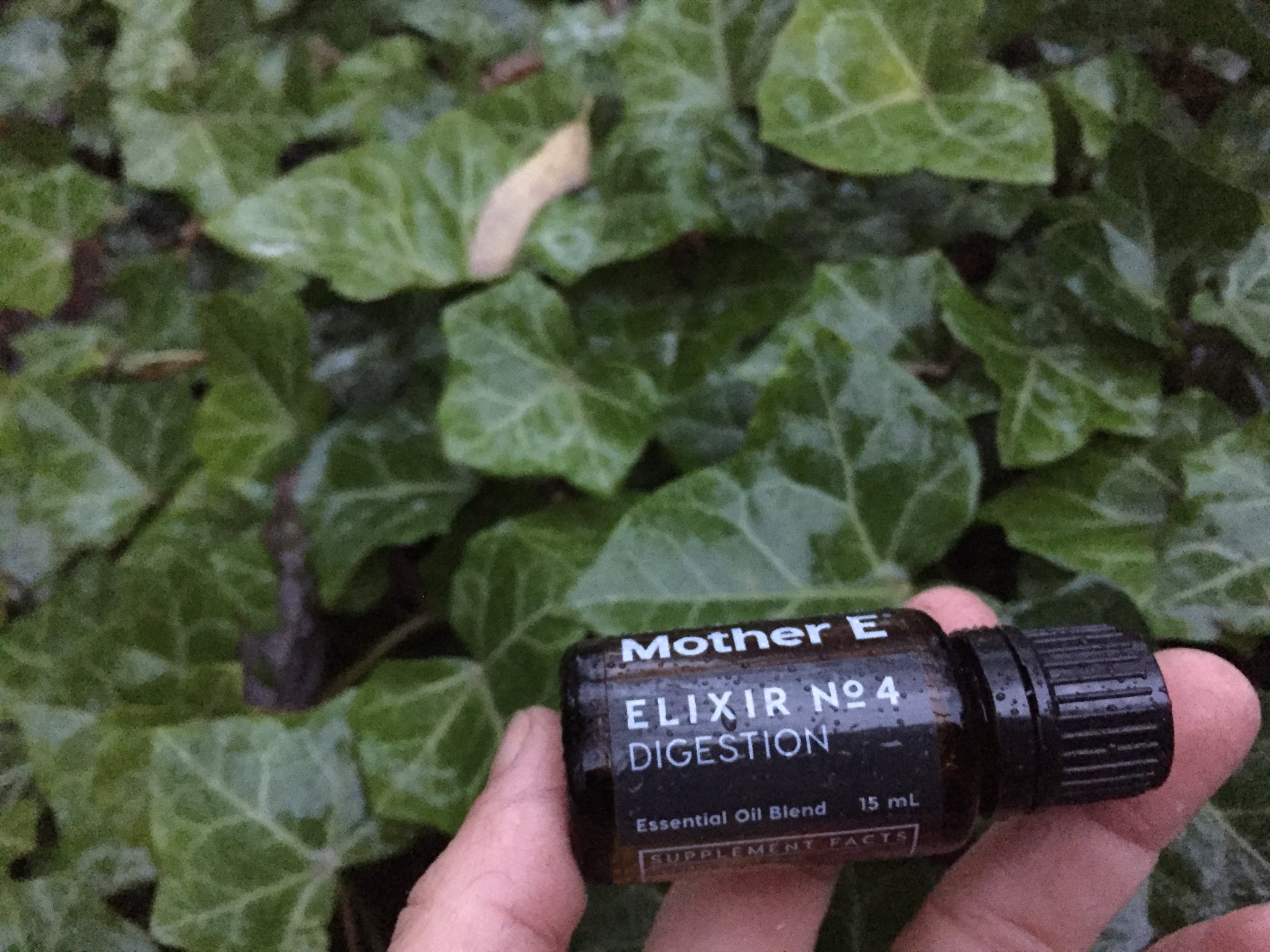Elixir No 4 Digestion blend being held up in front of wet green vine leaves