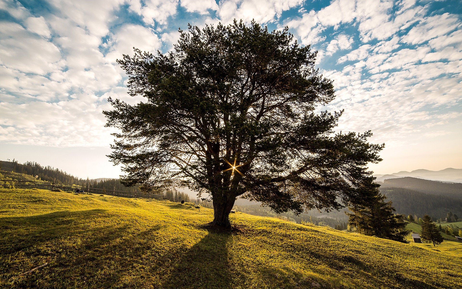Beautiful tree on a hillside with sunlight, sky, and clouds in background