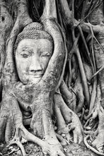 Rooted Buddha (Available for a Limited Time)