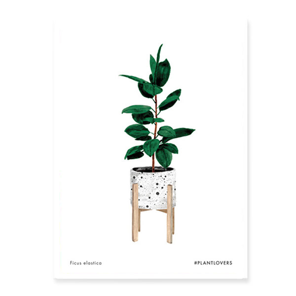 Art print - Ficus (Medium)