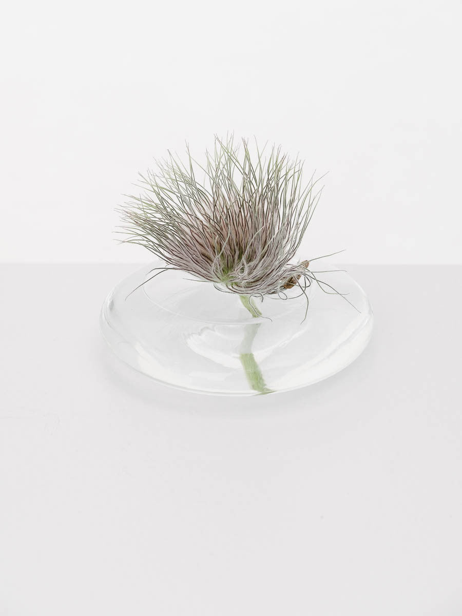 Bud Vase in Clear Glass