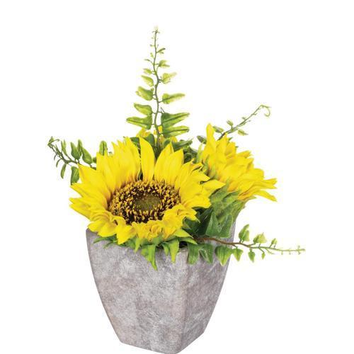 Large Sunflower Potted Plant