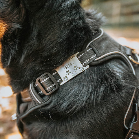 Dog harness with tag attached