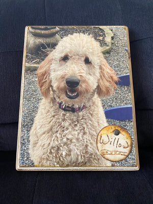 Wood Mixed Media Pet Photo - Copper Paws