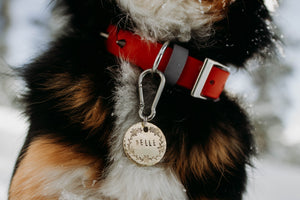 Moana- Simple Style - Copper Paws Dog Tags