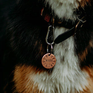 Nelle- Simple Style - Copper Paws Dog Tags