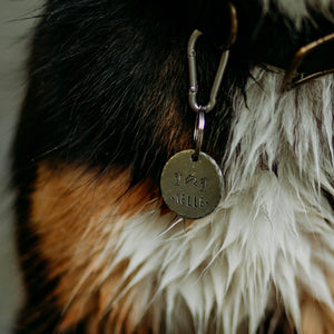 Splash- Summer Collection - Copper Paws Dog Tags