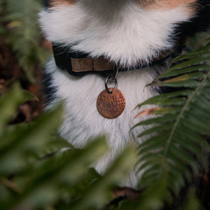 Chief Wilderness Explorer - Copper Paws Dog Tags