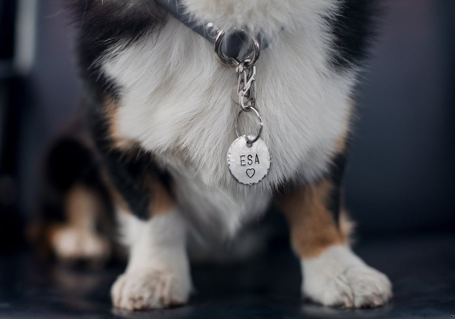 Service/Therapy Dog/ESA - Copper Paws Dog Tags