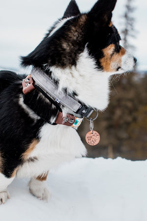 Hike On 1 - Copper Paws Dog Tags