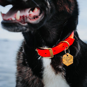Samson- Simple Style - Copper Paws Dog Tags