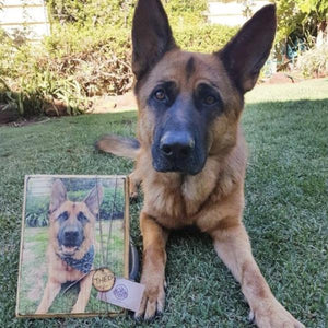 Wooden Pet Photo - Copper Paws