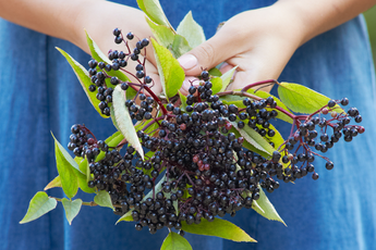 Elder Magic To Boost Immune System (Plus, an Elderberry Syrup Recipe)