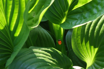 It All Started With A Ladybug: Summer Gratitude
