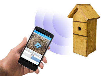 Meet The UK's First WiFi Bird Box Camera