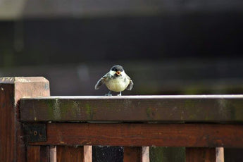 Living On The Fledge: What To Do With Our Flailing Fledglings