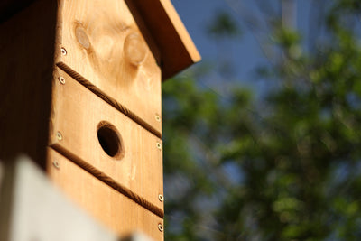 How's It Hangin'? – Eight Tips For Placing Your Bird Box Just Right