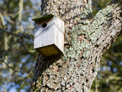 Put Up a Bird Box for National Nest Box Week