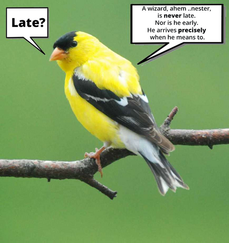Late Nesters goldfinch