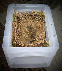 what to do with an old bird's nest