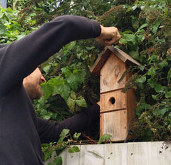 mounting a bird box