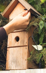 bird box installation