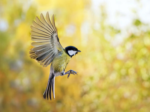 Wildlife bird photography