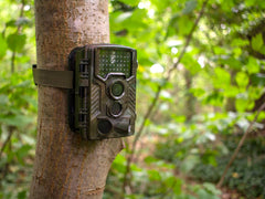 Camouflaged trail camera secured to tree