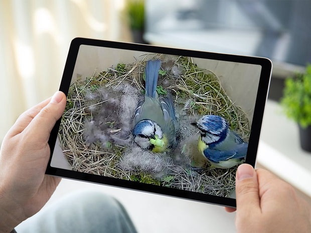 WiFi Bird Box Camera Ultimate Bundle