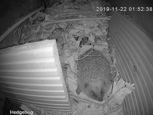 Hedgehog Box WiFi Camera Kit