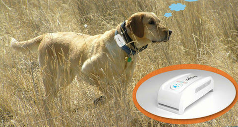 GPS chip for dog Web Tracking & Phone