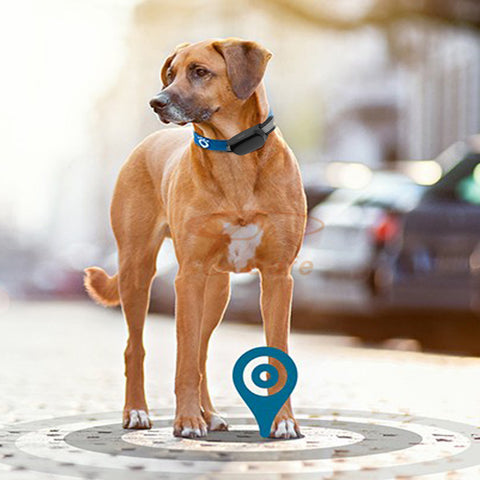 Pet GPS tracker with collar SIM card