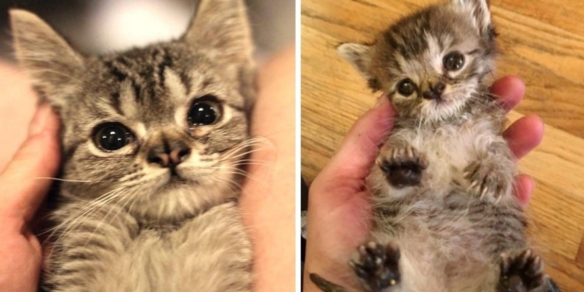 A Special Kitten Acquired The Most Adorable Grumpy Face Because Of Her Double Nose