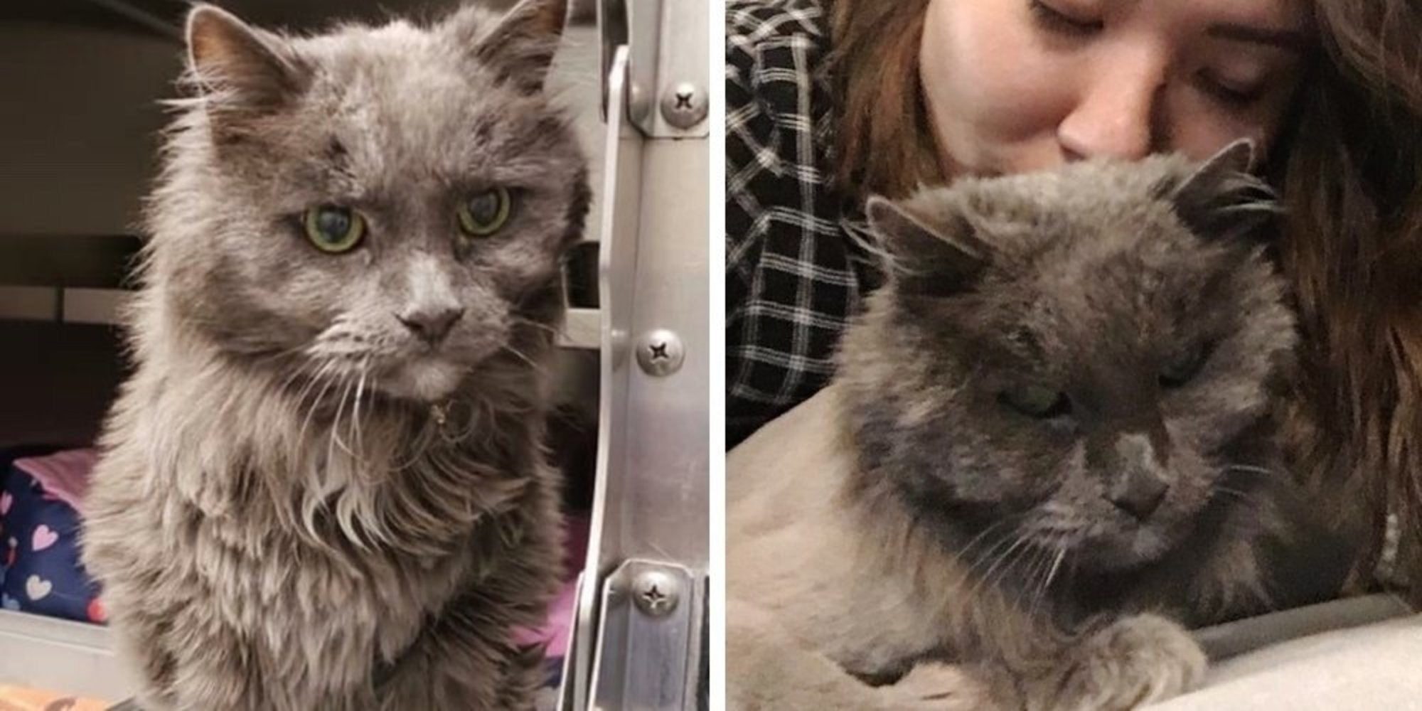 A Woman Wanted to Adopt a Cat That Nobody Wanted and Found This Beautiful 20-Year-Old Kitty Instead, Waiting for a Home