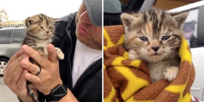 A Rescued Kitten from the Streets Loves All the Cuddles That She Can Get by Meowing and Purring