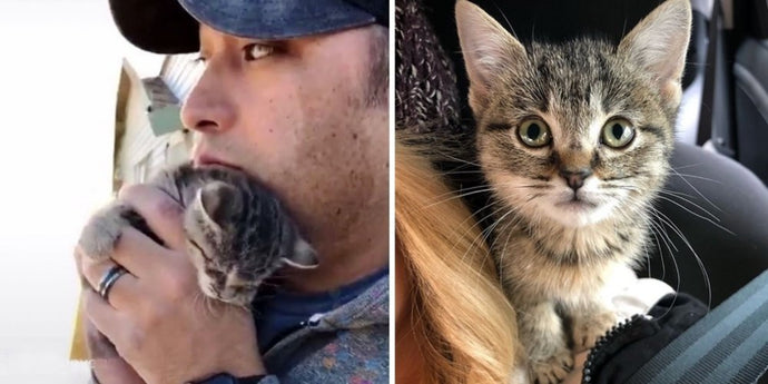 A Beautiful and Peculiar Kitten Living in a Junk Pile Gets Rescued And Gets a Forever Human