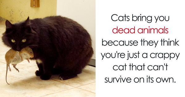 "We Compiled 27 Mind Blowing Facts For You Regarding Cats That Will Make you Say, ""Hmm Interesting""."