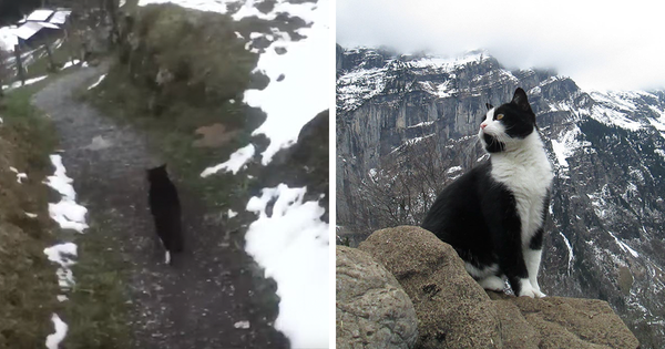This Switzerland Valley Has the Cutest Tour Guide That will Not Let You Get Lost In the Area