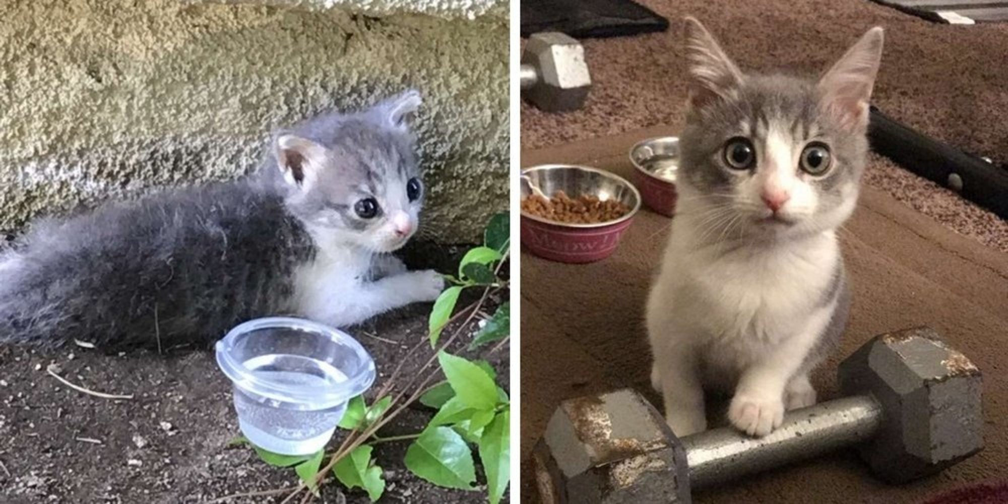 A Teensy Kitten Saved From a Driveway Got a Forever Home and Changed the Life of Her Rescuer As well