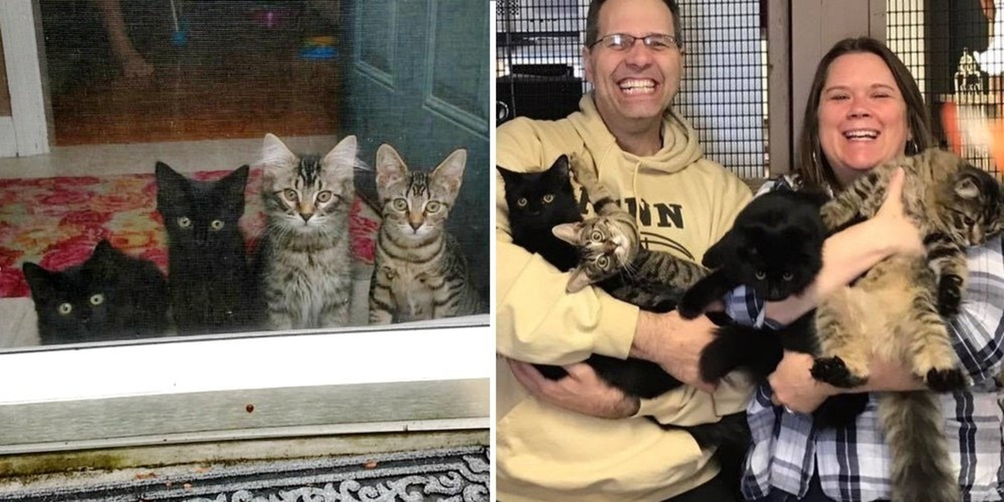 A Couple Took Four Kittens Under Their Care but the Little Fur Balls Came With a Plan of Their Own and Things Did Not Go as Planned For the Better