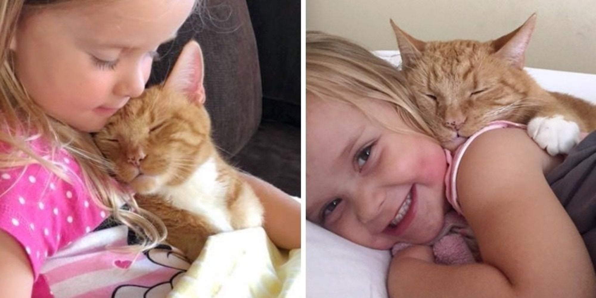After 13 Years Of Companionship Between This Cat and a Woman, He Now Protects Her Little girl and Listens When She Reads