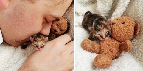 Preemie Little Cat Was Abandoned By Her Birth Cat Mom But a Family Swooped In and Saved Her With Their Love