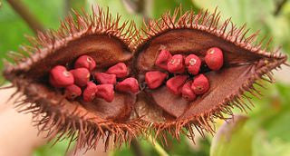 Annatto Seed or Achiote