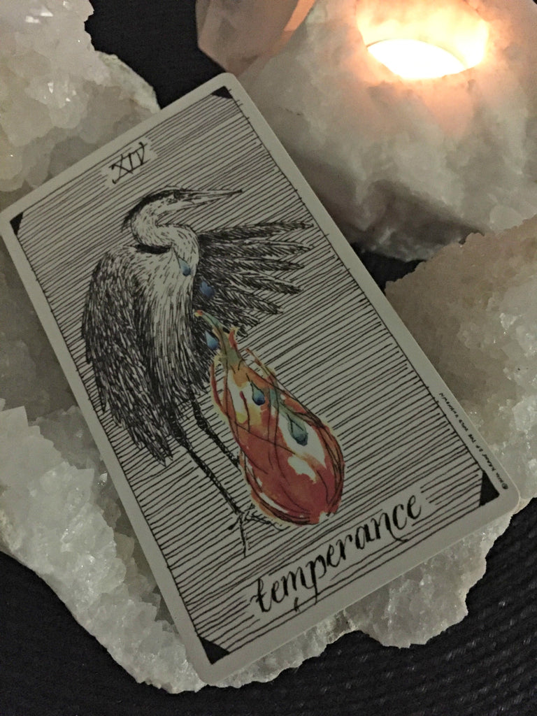 The Wild Unknown Tarot, Temperance, The Peaceful Tarot Reading